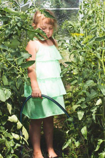 Ekologiczna uprawa pomidorów